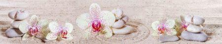 Белая орхидея. Фартук кухонный пластиковый.