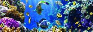 Коралловый риф. Фартук АБС пластик