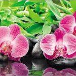 Орхидеи. Фартук 3 метра