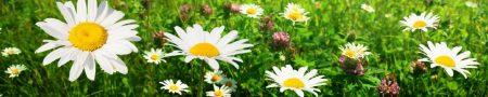 zvety-12341121