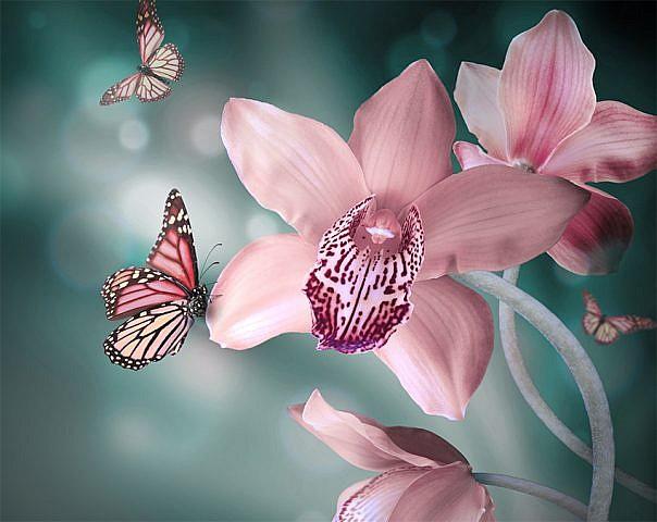 Фотопанно Бабочки, размер 300х238 (046)