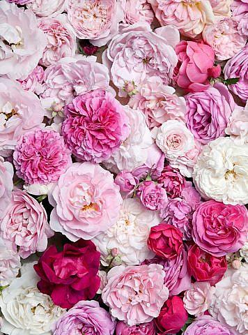 Фотопанно Крупные цветы, размер 200x270 (087)