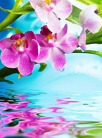 Фотопанно Цветки орхидеи, размер 200x270 (096)