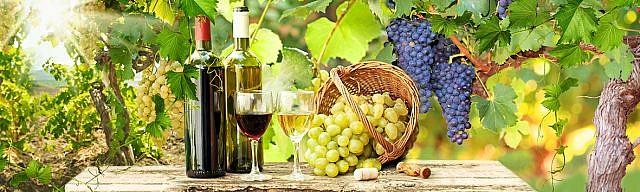 Вино 298