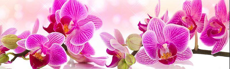 Цветы 198