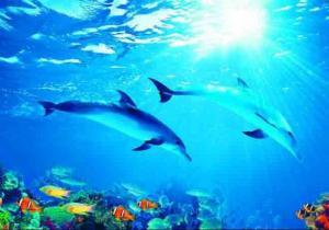 4л Дельфины 194-136