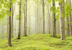 9л Весенний лес 291-204
