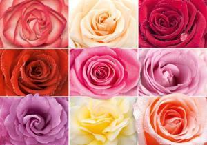 9л  Разноцветное настроение 291-204