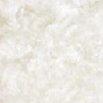 Морская раковина гладкая (Seashell Smooth)