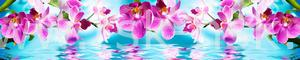 Орхидеи 622
