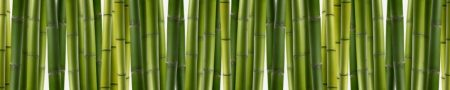 Зеленый бамбук 3 метра. ГЛЯНЕЦ!!!