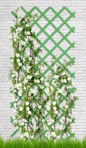 Зеленая на белой стене шпалера