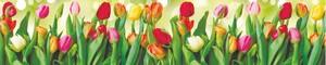 Тюльпаны 39