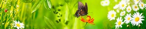 13 Бабочки