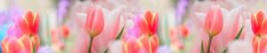 Тюльпаны 52