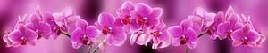 Орхидеи 280