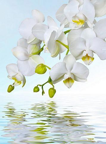 Фотопанно Орхидея над водой, размер 200x270 (244)