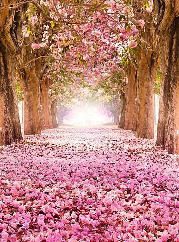 Фотопанно Цветущие деревья, размер 200x270