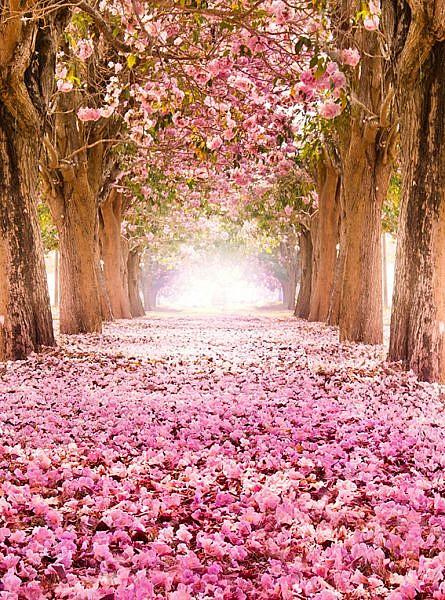Фотопанно Цветущие деревья, размер 200×270