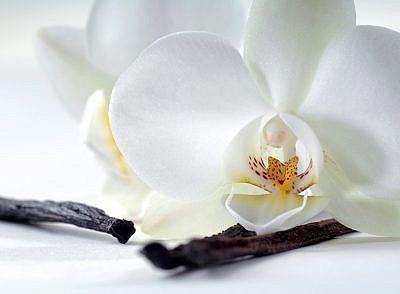 Фотопанно Орхидея и ваниль, размер 200x147 (321)