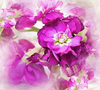 Фотопанно Цветы дымка, размер 300x270 (006)