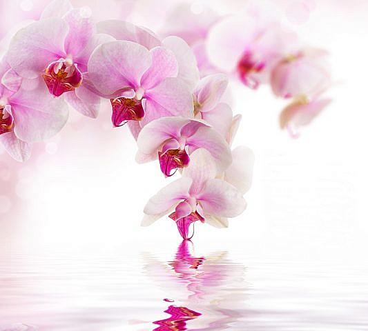 Фотопанно Розовая орхидея, размер 300x270 (070)