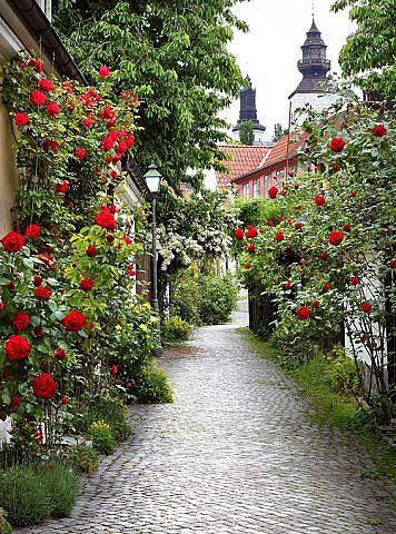Фотопанно Аллея роз, размер 200x270 (072)