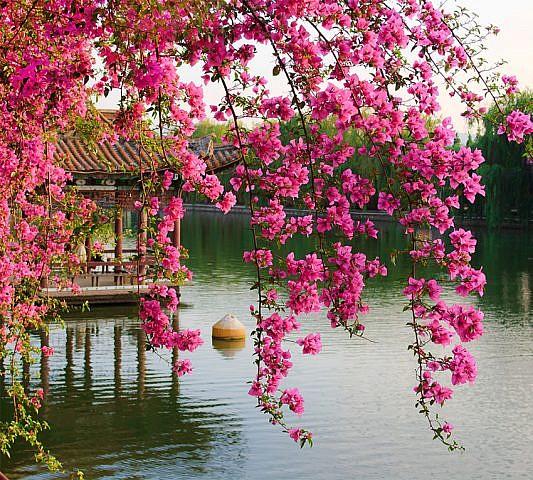 Фотопанно Цветущие ветви в саду Китая, размер 300x270 (077)