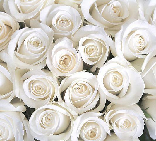 Фотопанно Розы белые, размер 300x270 (В1-091 )