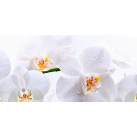Фартук кухонный пластиковый 3 метра Орхидеи 245 (Фотопечать) ПП