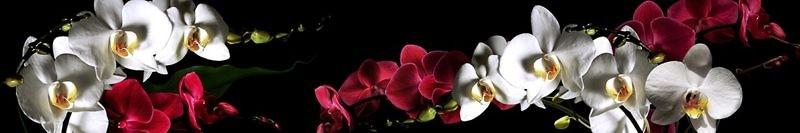 Фартук кухонный пластиковый 3 метра Орхидеи 172 (Фотопечать) ПП
