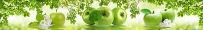 2364 Яблоки фартук пластик