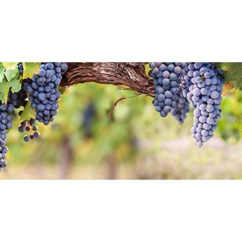 Фартук кухонный пластиковый 3 метра Виноград 840 (Фотопечать) ПП