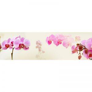 Фартук кухонный пластиковый 3х0,6 метра Розовые орхидеи 9237