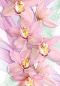 4л Орхидеи 194-136