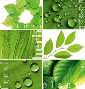 6л Зеленая мозаика 194-204