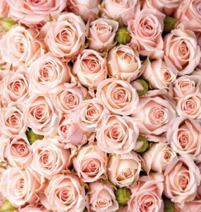 6л Розы 194-204