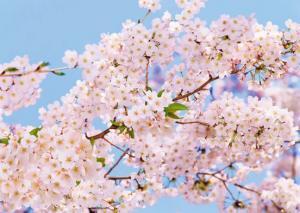 8л Весна 272-194