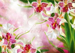 8л Цветочный вальс 272-194