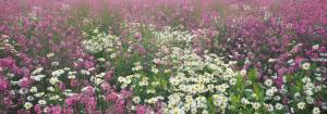 8л  Поляна цветов 388-136
